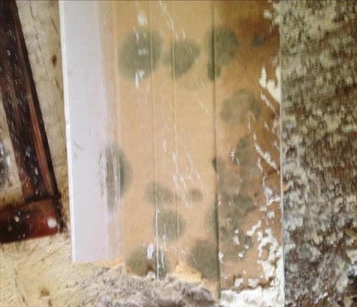 Quick mold growth